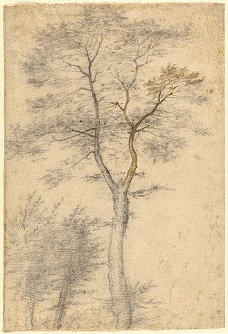 Three Studies of Trees (Getty Museum) fra bartolomeo  1508