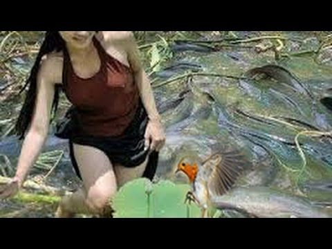 Amazing Girls Fishing, How to use Generator Trapping Fish, Village Fishing