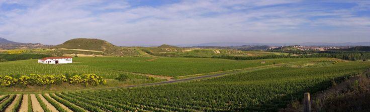 Viña Baltracones es uno de los viñedos que se pueden conocer de las Bodegas Muga. Durante la visita guiada podemos disfrutar de unas vistas típicas riojanas, con los montes Obarenses protegiendo el lugar.