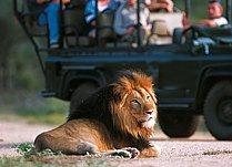 Kruger National Park - South Africa.