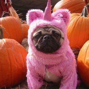 pug unicorn
