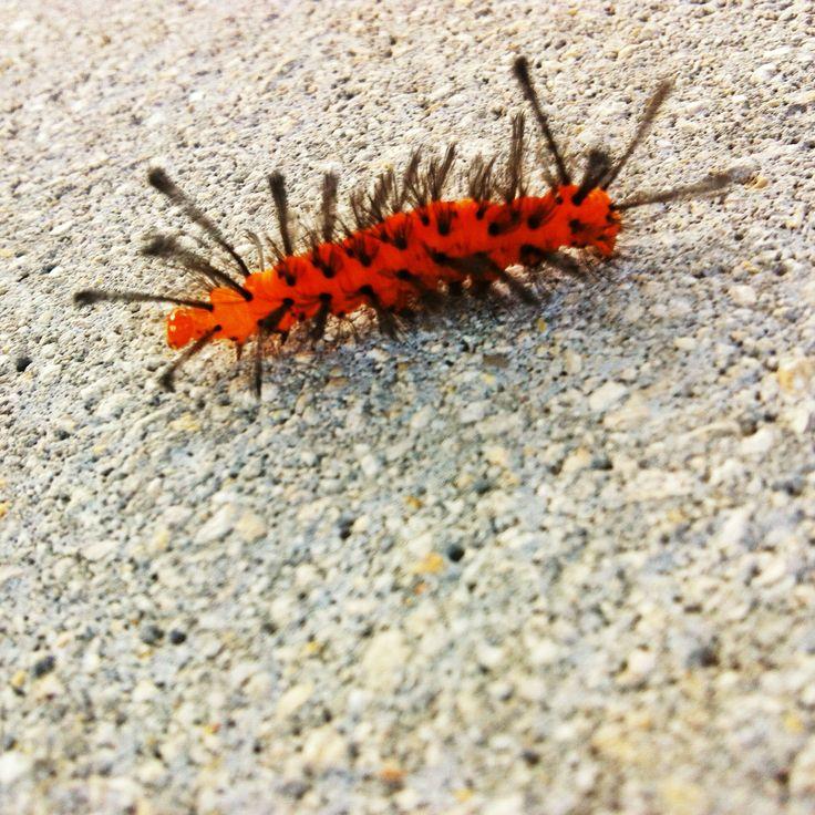 Caterpillar Posing #iPhonetography