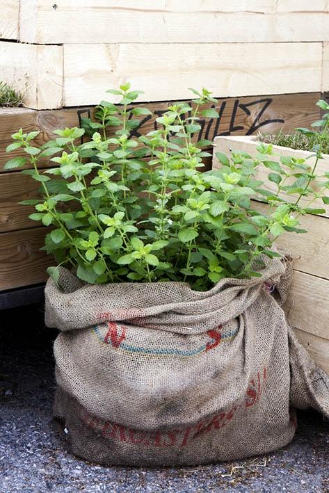 Coffee-bag gardening