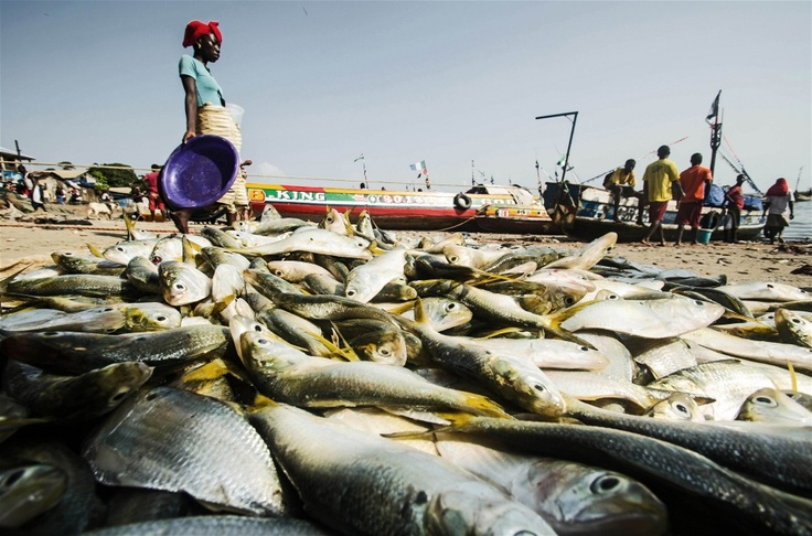 A woman walks past fish laid out for sale in Tombo, Sierra Leone (Dec 2012)