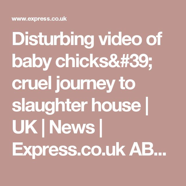 Disturbing video of baby chicks' cruel journey to slaughter house  | UK | News | Express.co.uk ABSOLUTELY DISGUSTING! THEY HAVE FEELINGS YOU DUMB SHITS!