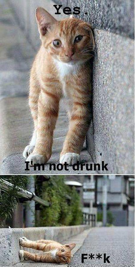 I'm pretty sober guys http://ibeebz.com