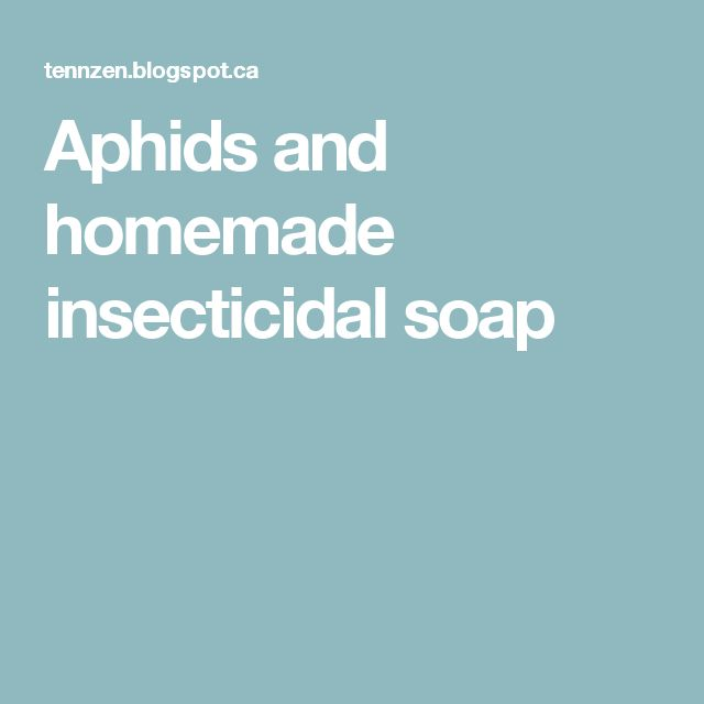Aphids and homemade insecticidal soap