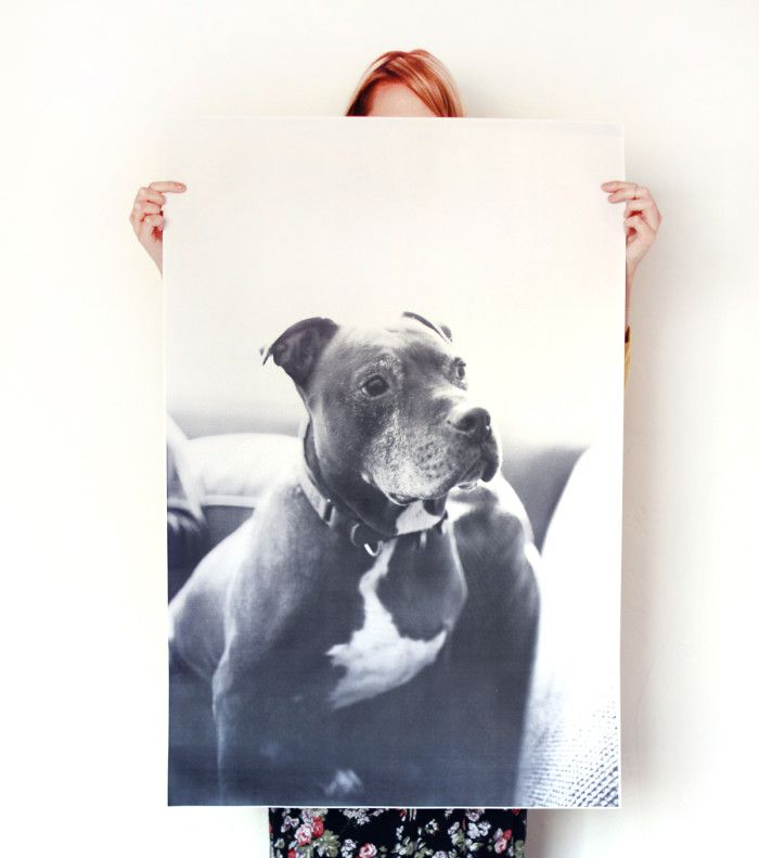 How to Make an Oversized Print of Your Dog for $5 - Barkpost - Blog From the Pups at BarkBox