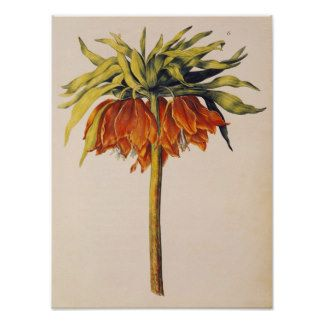Crown Fritillary, from 'La Guirlande de Julie' Poster