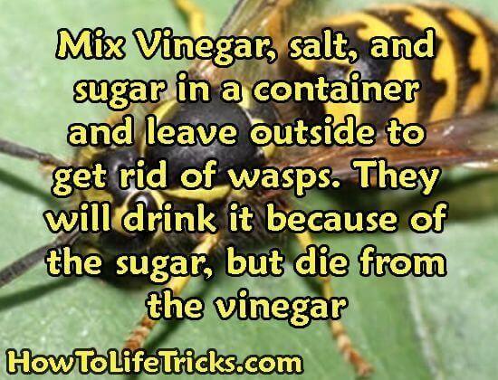 DIY Wasp Exterminator