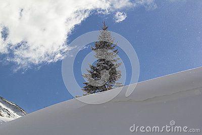 A single tree in a snow field