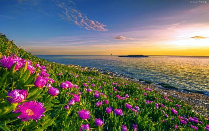 Wybrzeże, Kwiaty, Morze, Wysepka, Wschód, Słońca