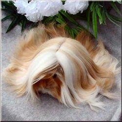 lots of hair guinea pig.... :)
