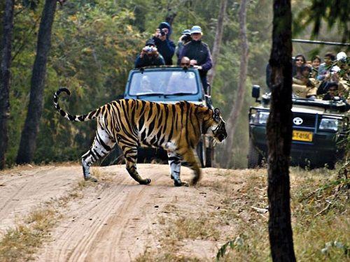 Jungle Safari in Dandeli