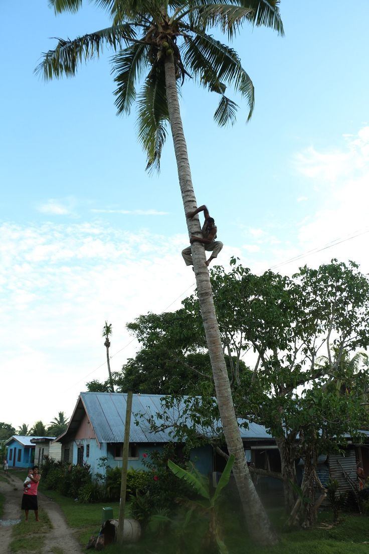 tree climbing with style