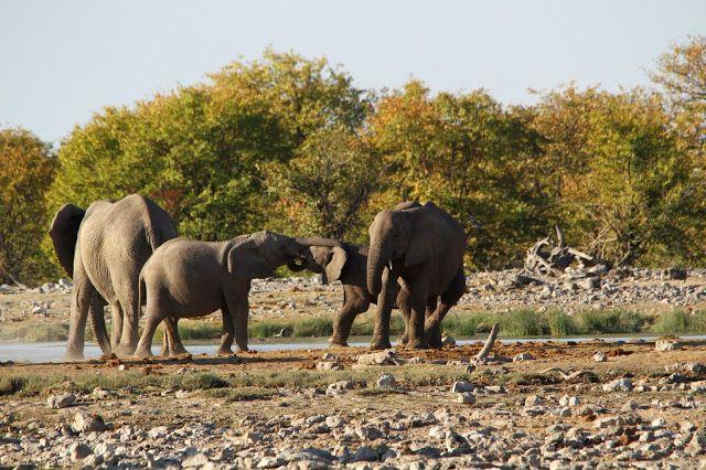 Viajar entre Viagens: 10 lugares a não perder na Namíbia