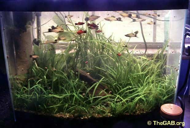 26 best images about fish tank on pinterest fish tanks for Natural fish tank
