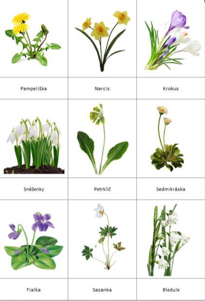 Třísložkové karty jarních květin