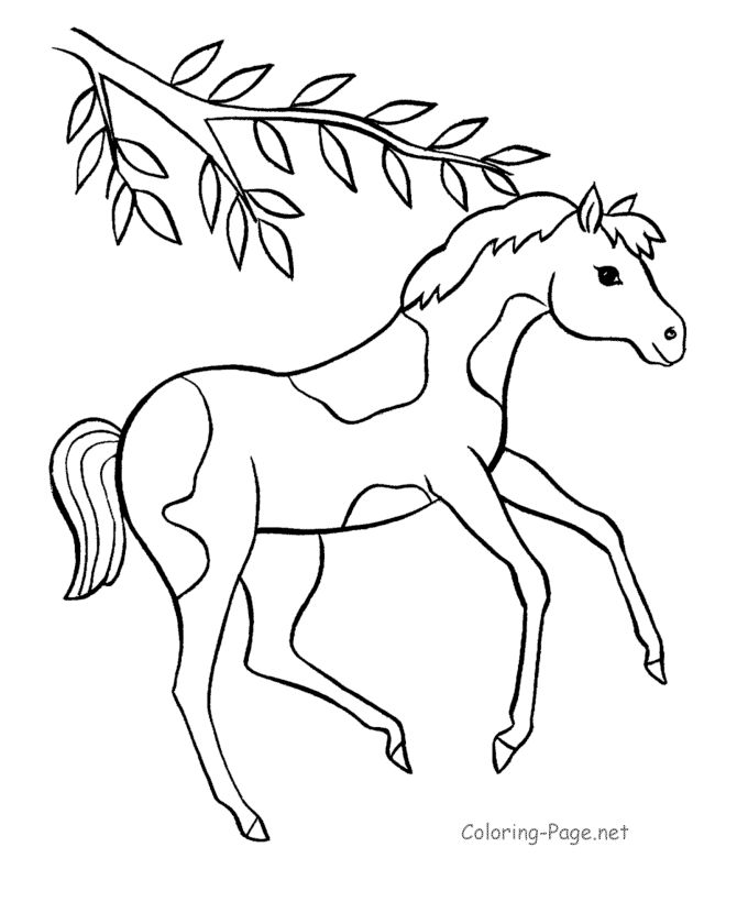Pinto Horse Coloring Pages: 21 Best Konji Images On Pinterest