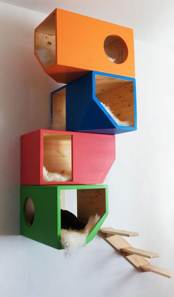 Bem Legaus!: Prédio de gatos
