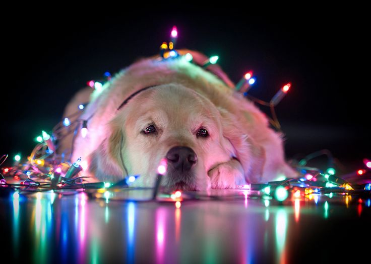Wrapped in Christmas lights!