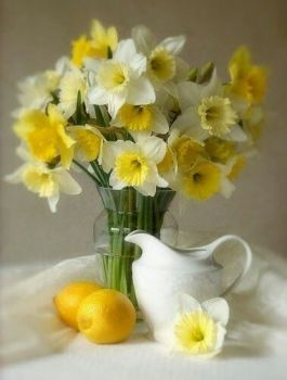 Happiness is: Yellow Daffodils on your breakfast tray! (20 pieces) 03/29/2014
