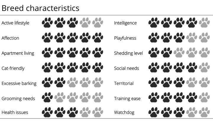 Boston terrier breed characteristics king charles
