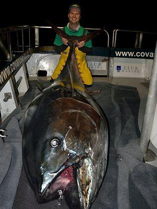 Monster New Zealand Bluefin Tuna  #Monsters #NewZealand  #BluefinTuna  #Bluefin  #Tuna  #Fishing  #Kamisco