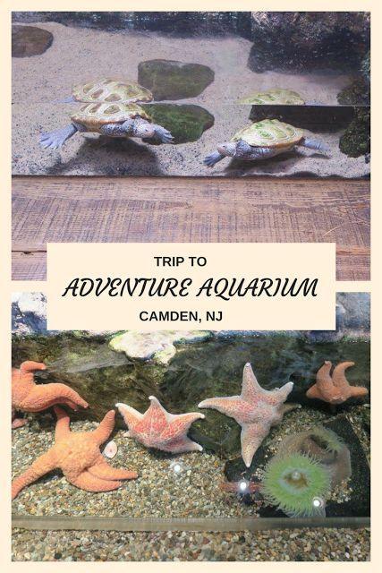 Trip to Adventure Aquarium in Camden NJ