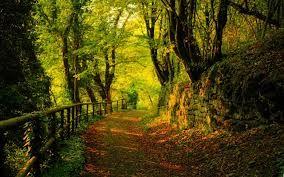 fantasy forest landscapes - Căutare Google