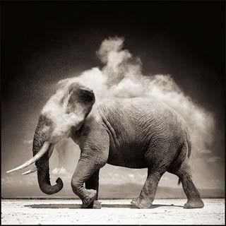 Tratamentos caseiros que podem ajudar a ter uma memória de elefante!