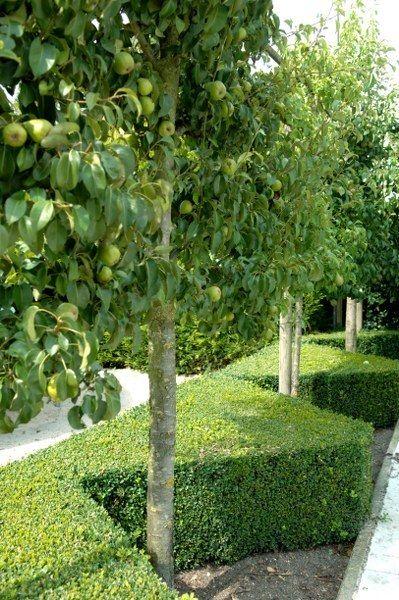 Een siertuin kan ook een eetbare tuin zijn.