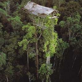 tree house in papau new guinea where the people build their houses 100 feet above the ground