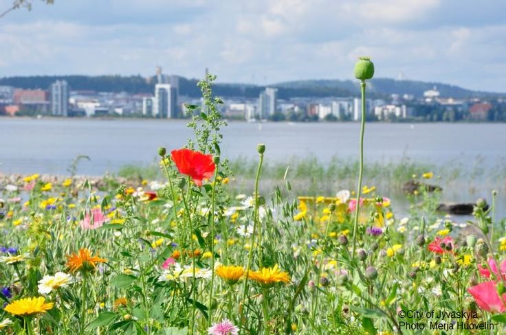 Flowers and City of Jyväskylä. ©City of Jyväskylä Photo: Merja Huovelin.