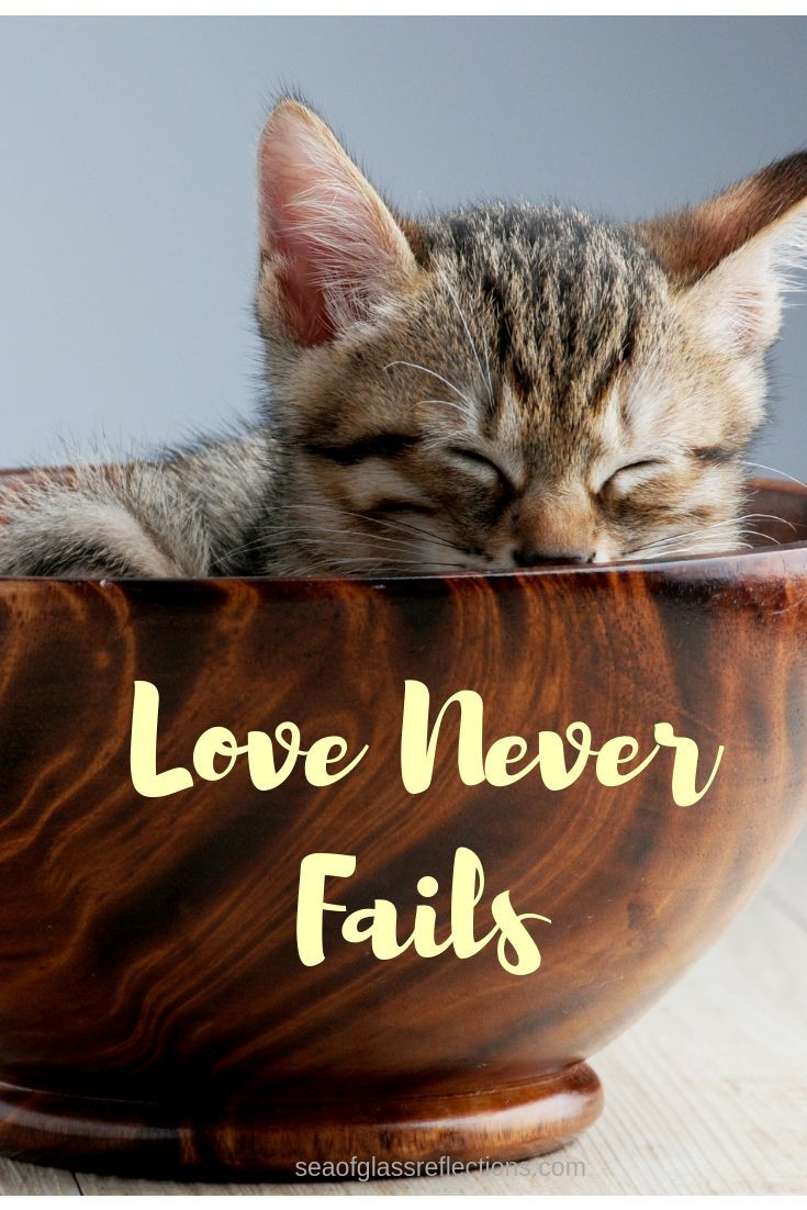 Love Is Everything Whether From Your Sweetheart Or Your Cat And All Love Comes From God Love Never Fails Lovenever Love Never Fails Finding Love Gods Love