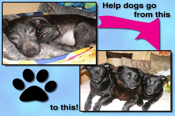 Support this cause!!: Adorable Animals