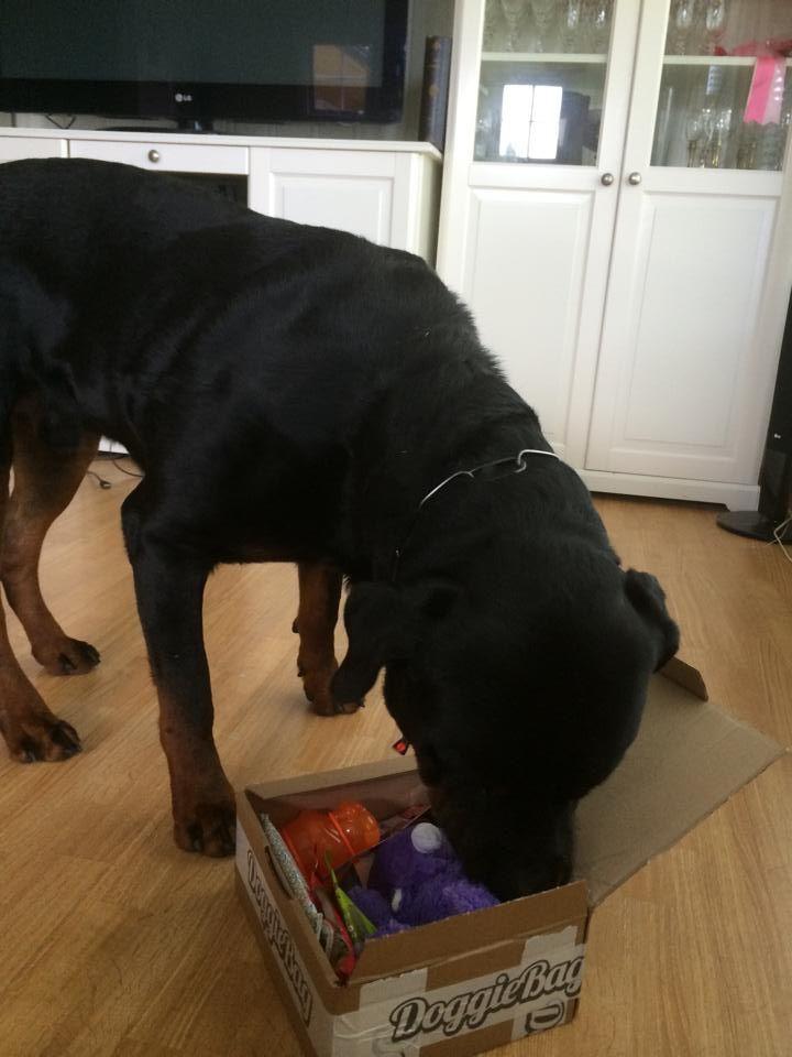 Troll - DoggieBag.no #DoggieBag #Hund