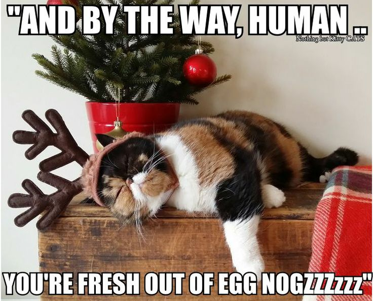 Funny Reindeer Meme : 21 best eggnog images on pinterest christmas time funny animal