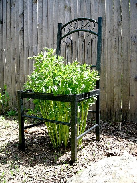 Never leave another chair at the curb… Cut the back off, and you have a sturdy plant support