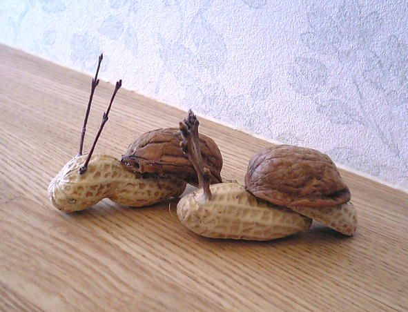 Erdnuss Wallnuss Schnecken