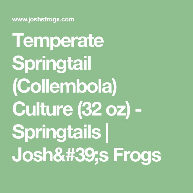Temperate Springtail (Collembola) Culture (32 oz) - Springtails | Josh's Frogs