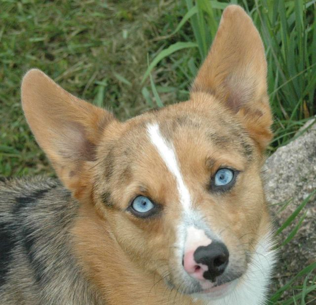Image result for rare mixed breed puppies