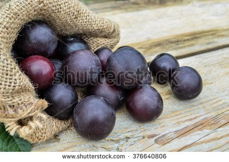 Red house plums in a bag