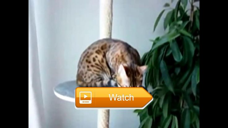 New Funny cats and dogs videos try not to laugh Funny cats on fan Funny cats    on Pet Lovers