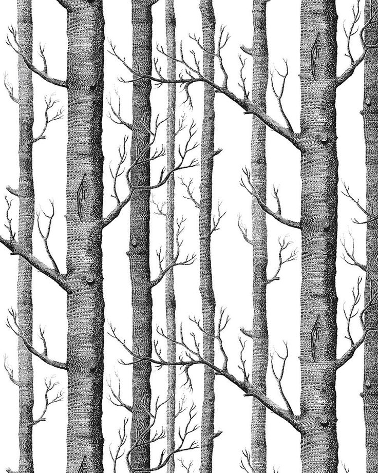 HaokHome® Modern Birch Tree Wallpaper Non Woven Forest Trunk Wall Paper  Blacku0026White   57square Feets · Birke TapeteTapeten