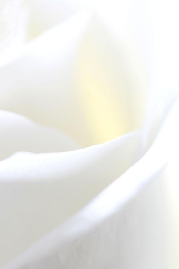 White Flower by Vernon Hyde