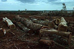 Buenos Aires - Deforestacion en Argentina