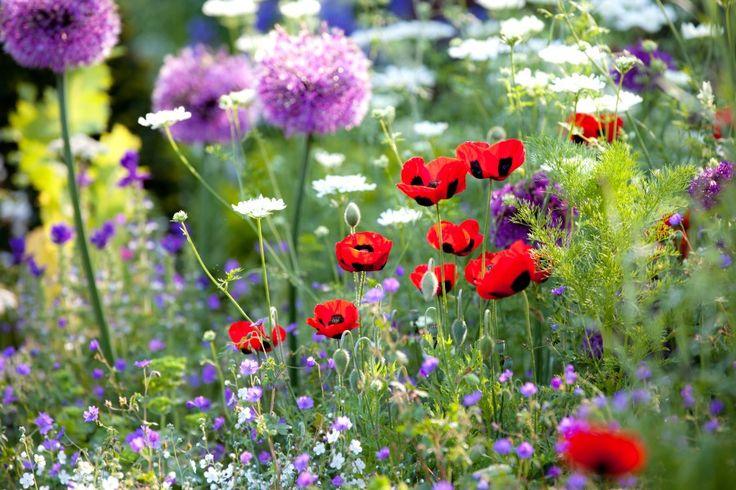 Growing Wild Flowers in Your Home Garden