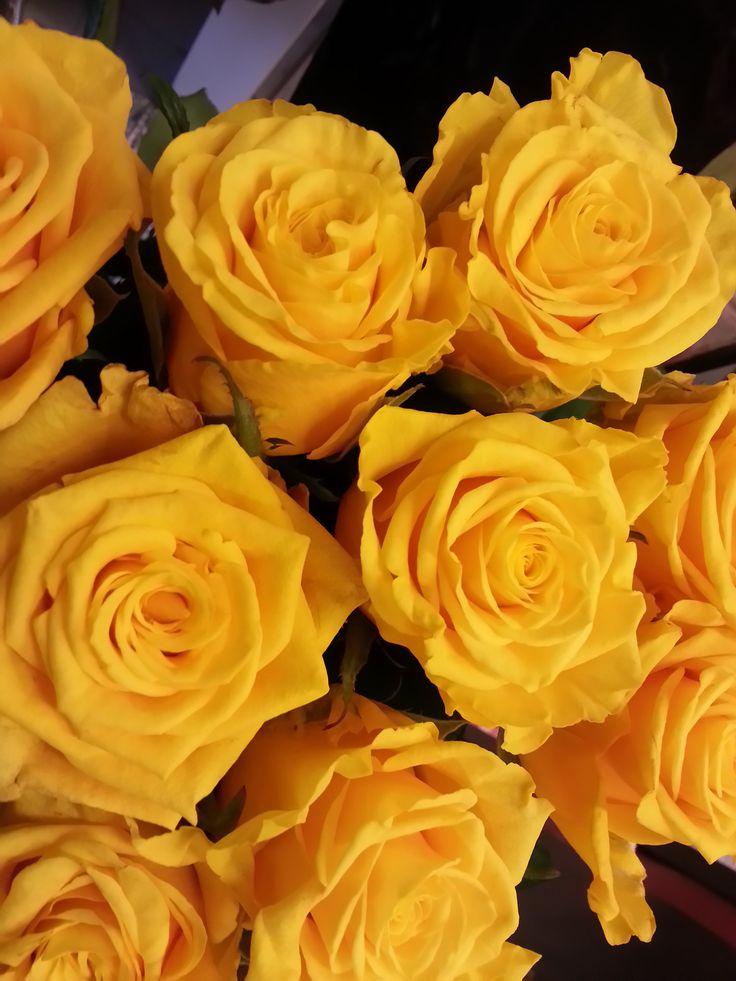 Keltaiset ruusut - Yellow #roses