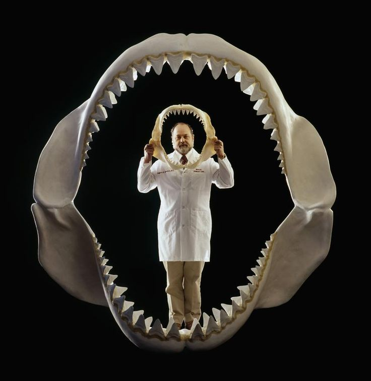 The Megalodon was 60 feet long and are considered the most formidable carnivore to ever have existed via BBC - Photo by Louie Psihoyos/Corbis and Jessica Roy